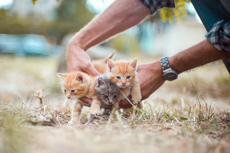 PrettyLitter Heroic Rescues of Cats and Kittens