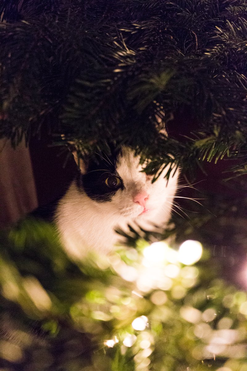 PrettyLitter 8 Wonderful Holiday Stories For Kids Featuring Felines