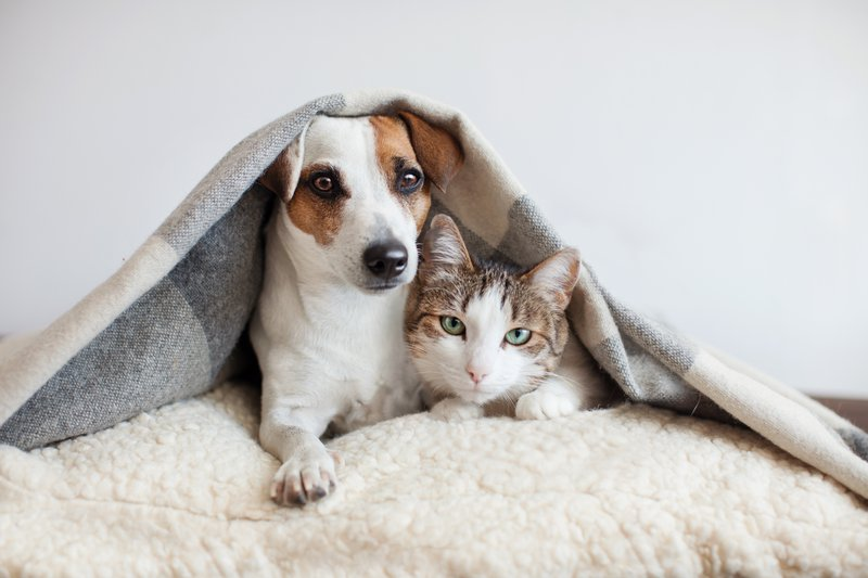 PrettyLitter Keeping it Fur-iendly: Cats & Dogs Living Together