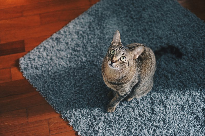 PrettyLitter What Every Cat Mom Should Know About Floor Cleaning Products
