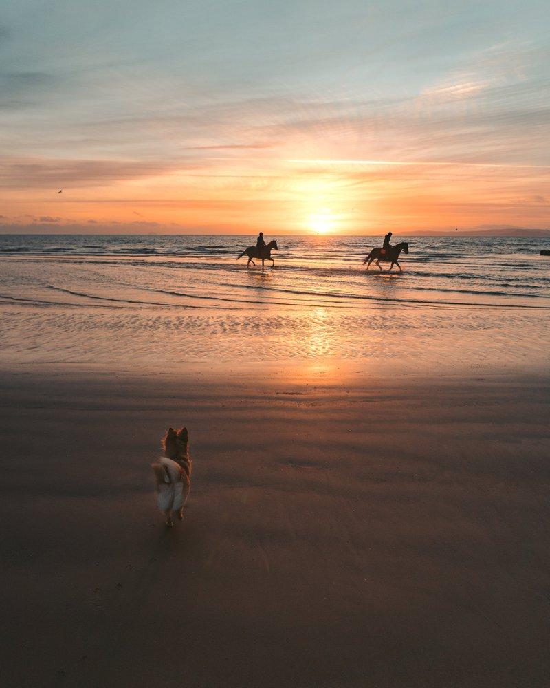 Dog Friendly Beach Views