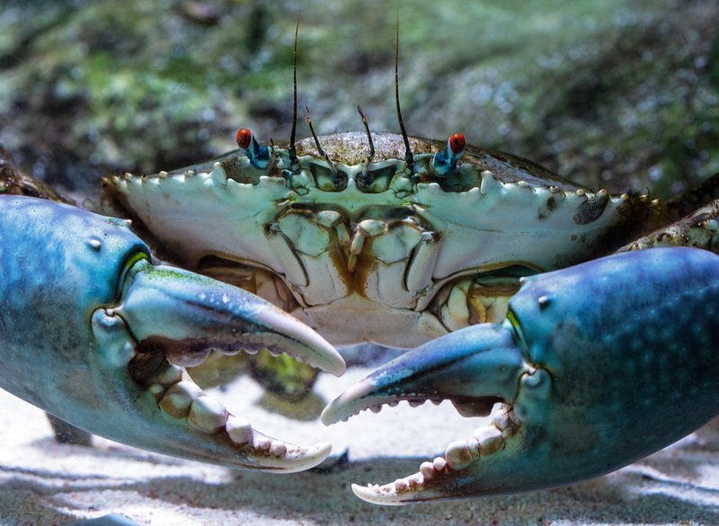things to do in Norfolk - take the children crabbing