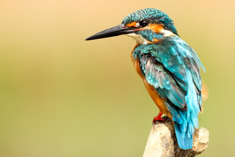 things to do in Norfolk - visit a bird reserve