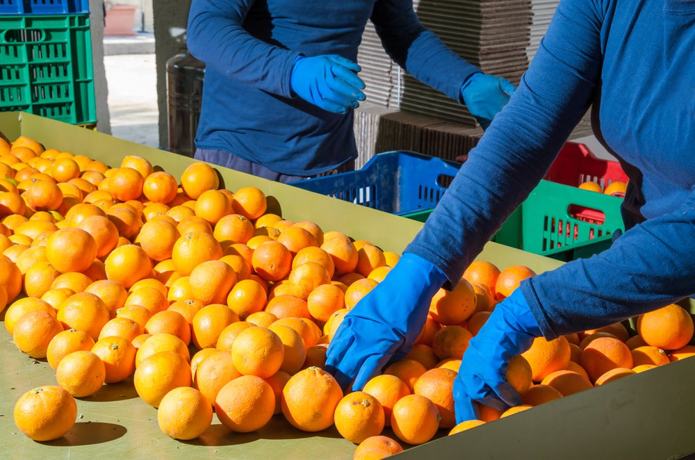 Seizoensarbeid in de fruitsector via Konvert