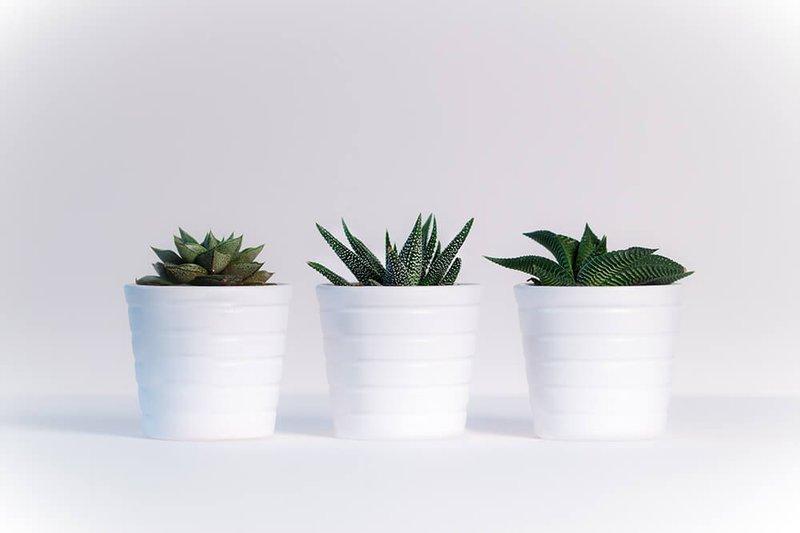 Planten kopen met ecocheques - Konvert
