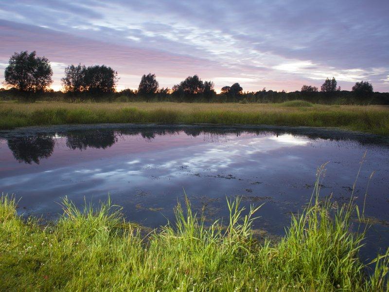Bruges arrière-pays -Brugse Omeland-Bois de Tilleghem-Tilleghem Bos