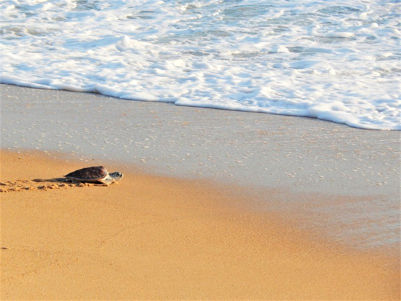 Thailand schildpadden