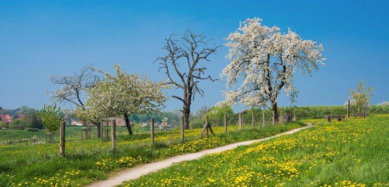 Hesbaye limbourgeoise en fleurs
