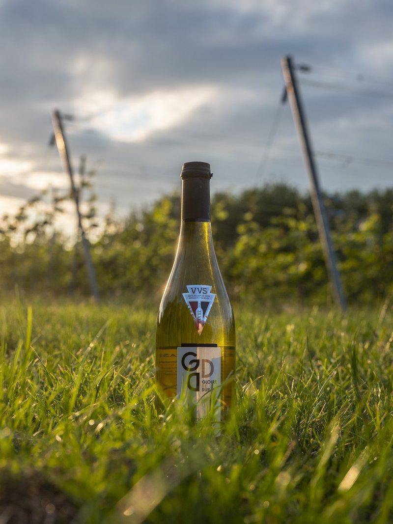 Hesbaye - vin Gloire de Duras